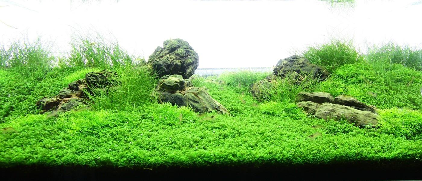 Рисунок 6 – Пример аквариума с почвопокровными растениями