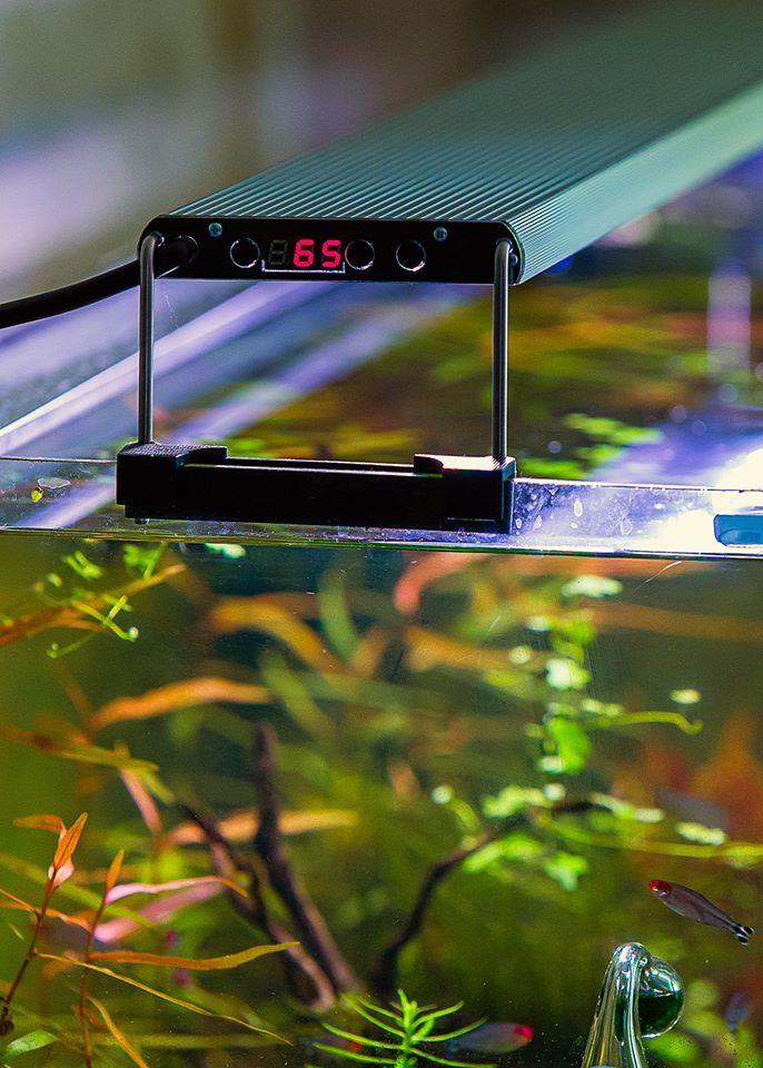 Яркость освещения зависит от типа аквариума