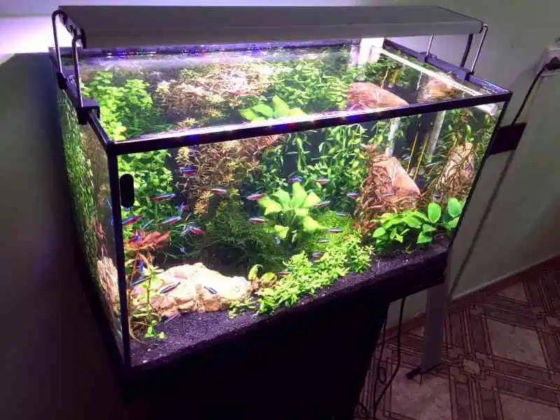 Рисунок 3 - Светильник на аквариуме
