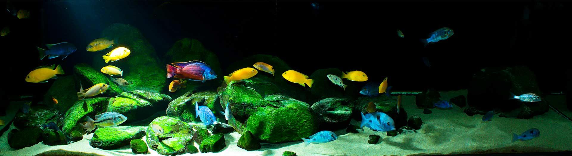 Освещение для аквариумов аквариума с цихлидами