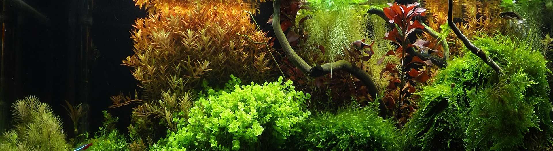 Освещение для аквариумов с растениями
