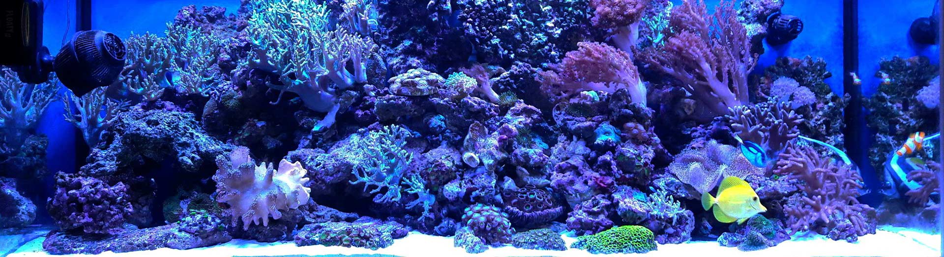 Освещение для морского аквариума